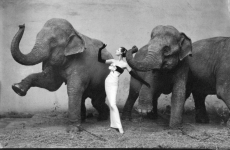 avedon-elephant-picture dovima so slonovi 1955